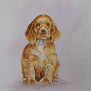 Puppy watercolour