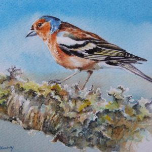 Chaffinch watercolour